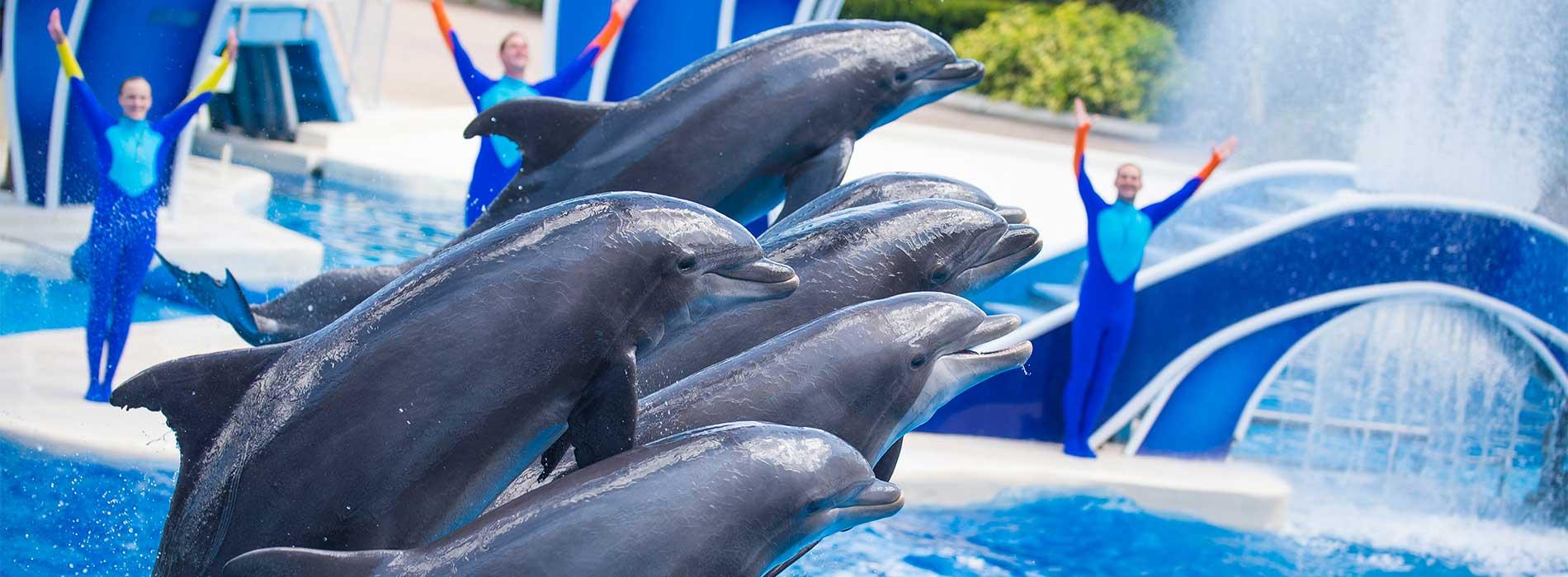 SeaWorld Orlando Dolphin Days Show
