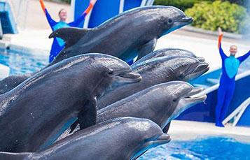 Dolphin Days at SeaWorld Orlando