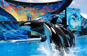 One Ocean show at SeaWorld Orlando
