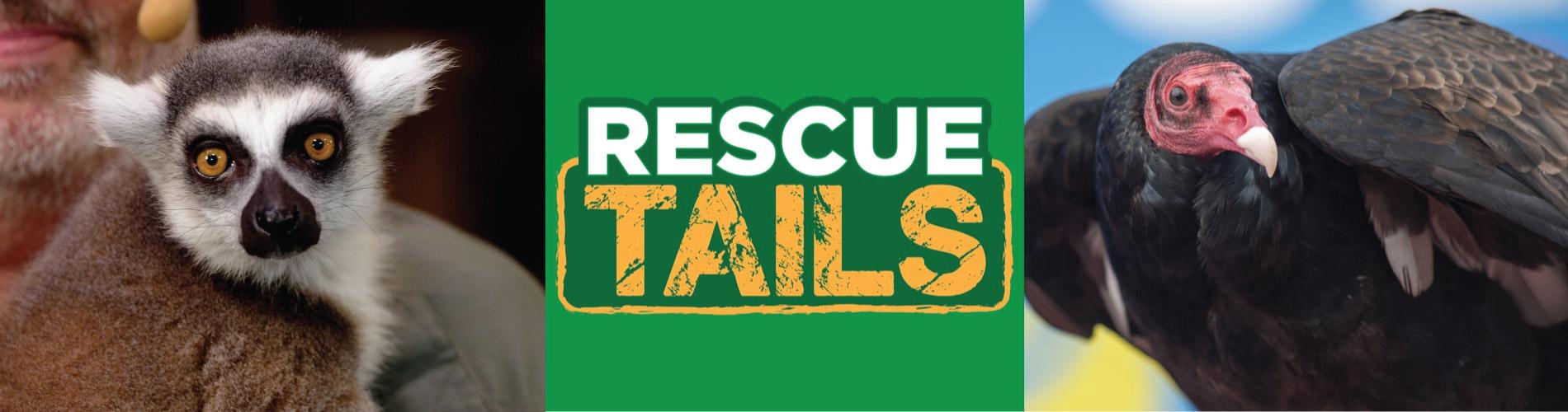 Rescue Tails at SeaWorld Orlando