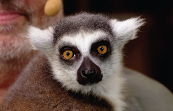 Monkey at Rescue Tails showSeaWorld Orlando