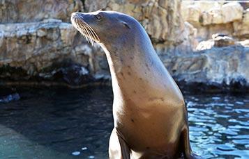 Sea Lion and Otter Spotlight at SeaWorld Orlando