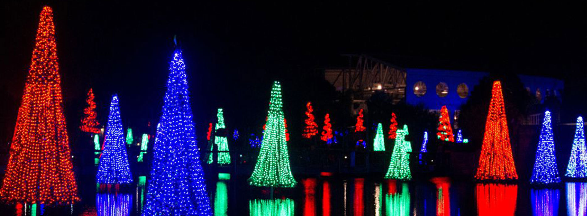 Sea of Trees at SeaWorld's Christmas Celebration
