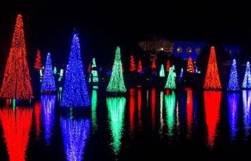 Sea of Trees at SeaWorld's Christmas Celebration