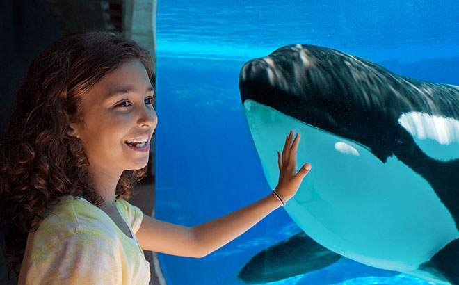 See Killer Whales from a different point of view at the underwater viewing window.