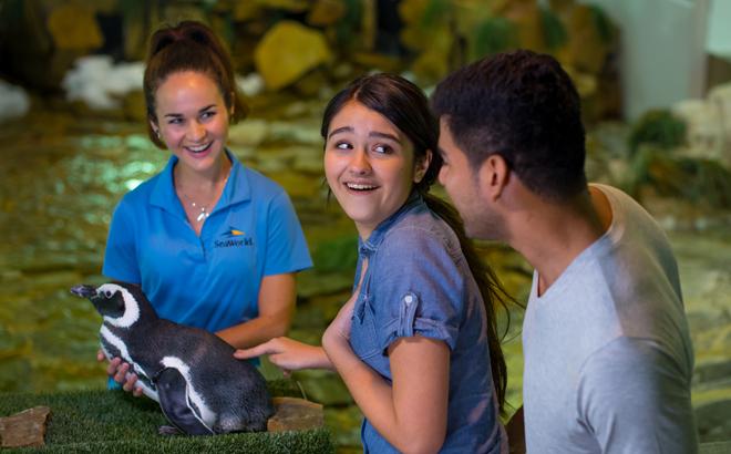 Penguin Encounter Tour at SeaWorld Orlando
