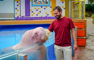 Walrus Encounter Tour at SeaWorld Orlando