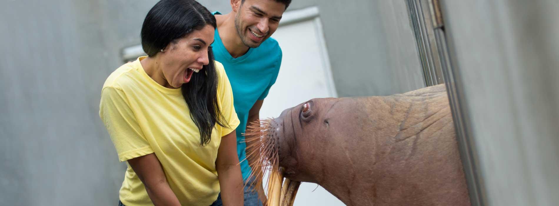 SeaWorld Orlando Walrus Tour