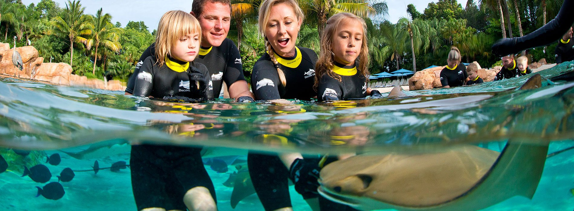 Feed rays and thousands of tropical fish at Discovery Cove.