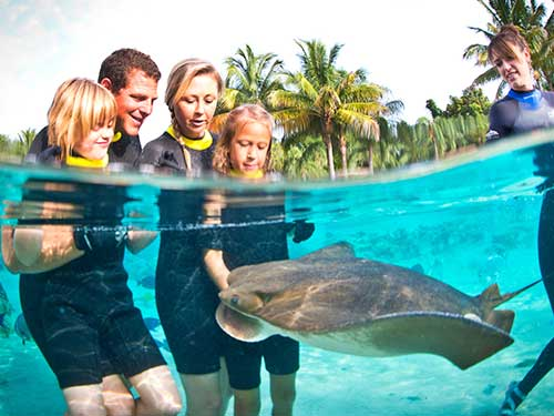 Feed incredible rays at Discovery Cove.