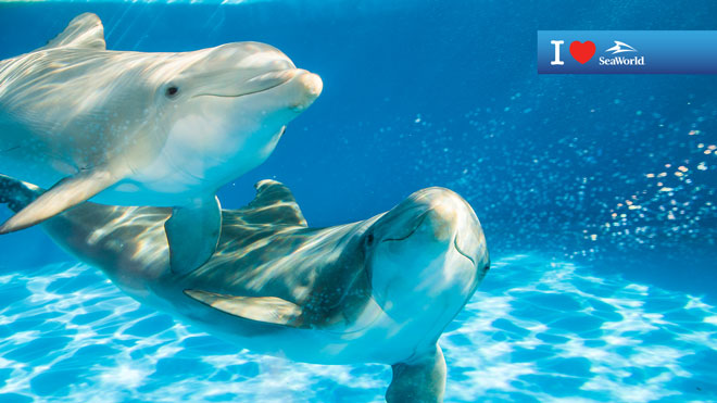 Two Dolphins Underwater Virtual Conferencing Background Preview