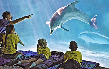 Sleepover with a Dolphin