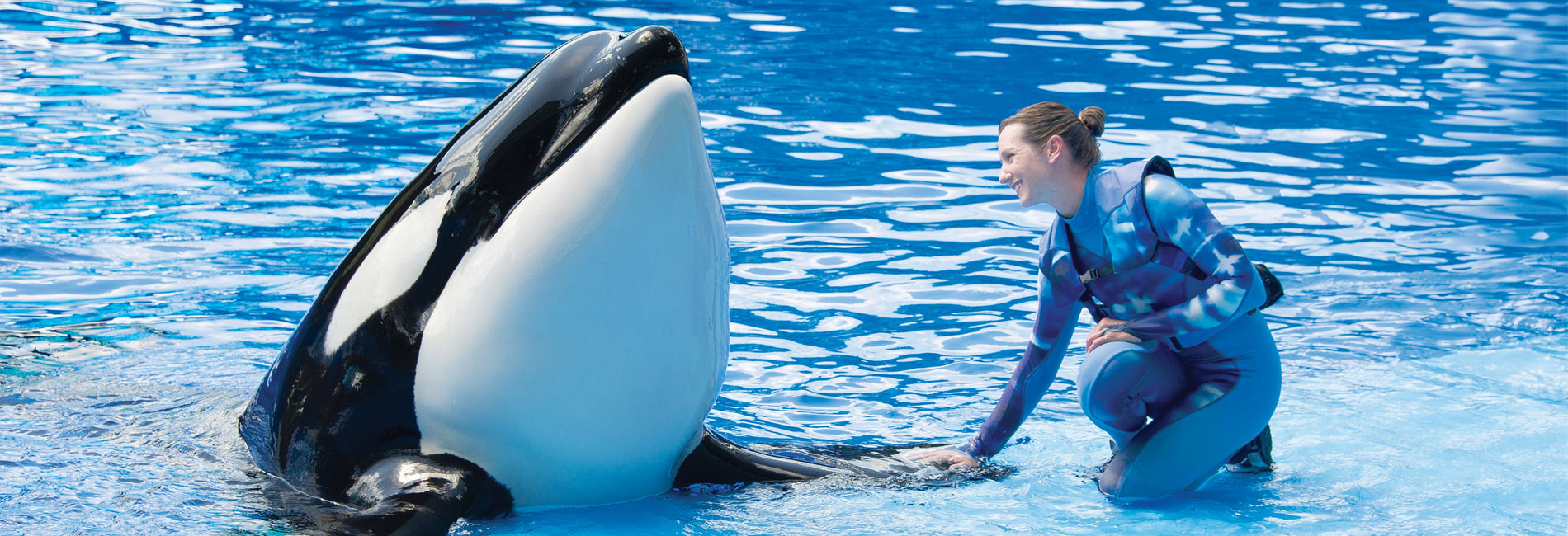 Killer Whales Behind the Scenes