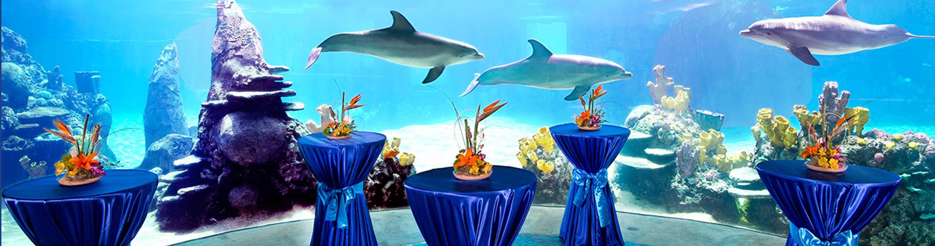 Group events at seaworld san antonio