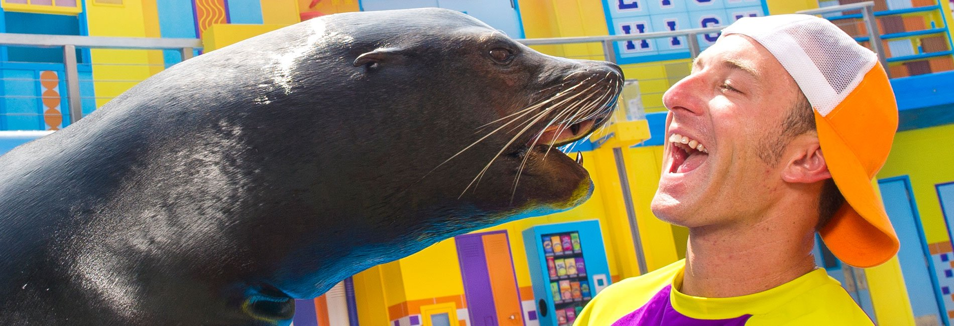 Sea Lion High