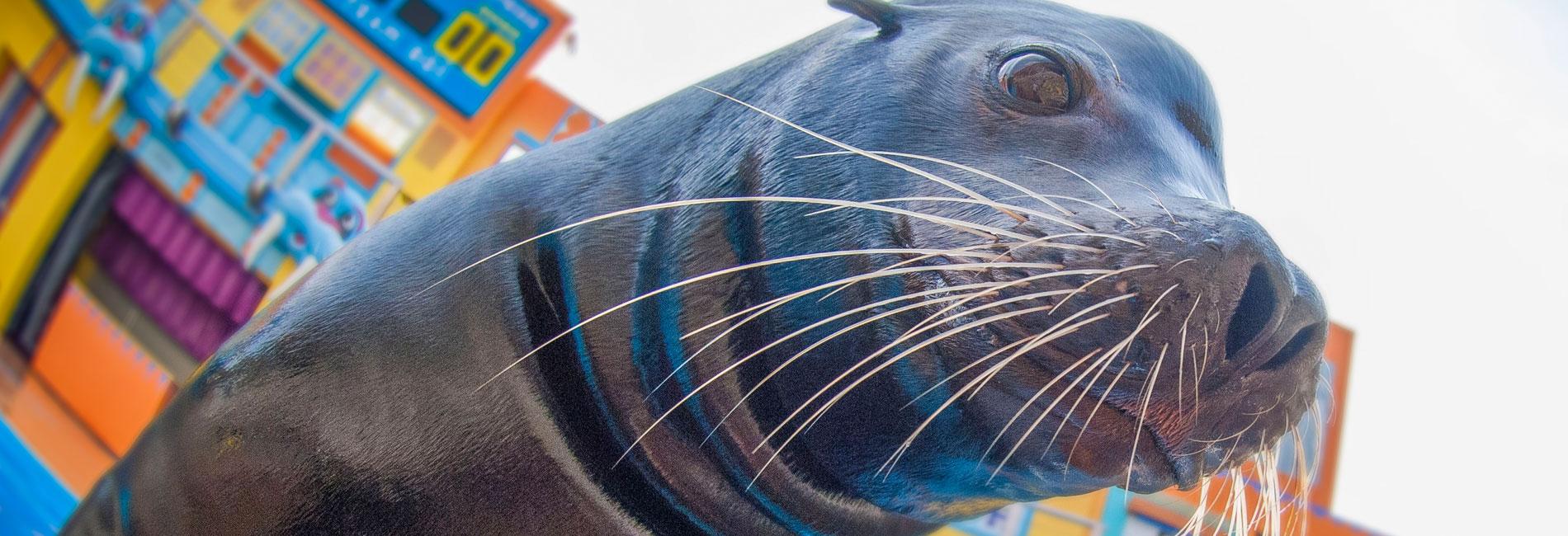 Sea Lions at Play
