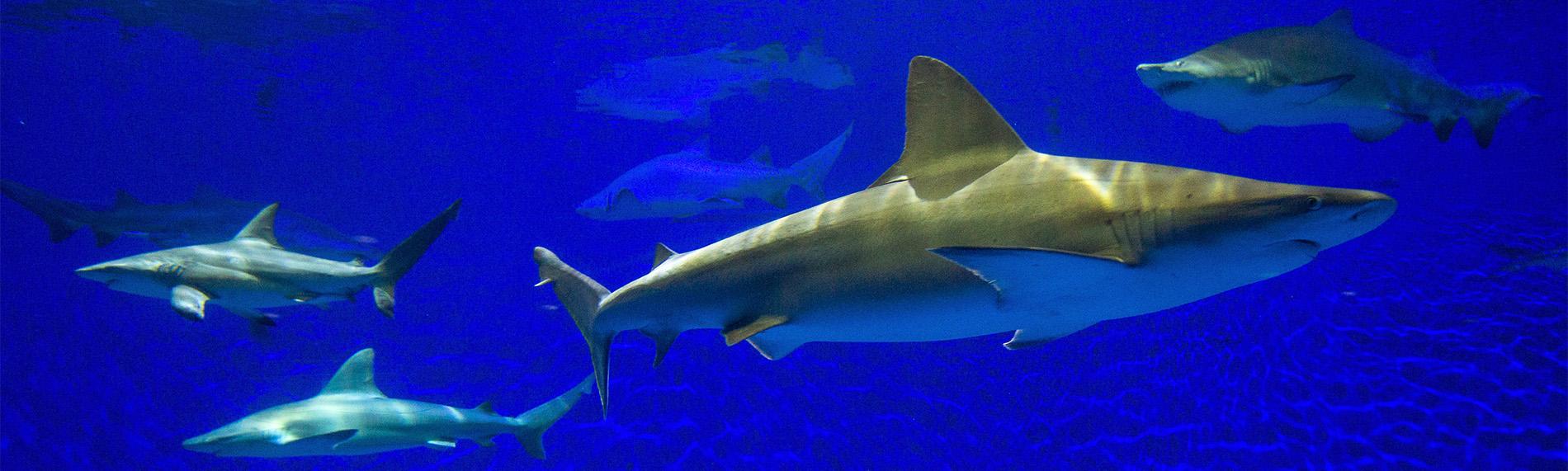 Shark Tour