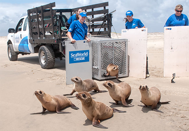 SeaWorld celebrates 36000 rescues with a special Rescue Weekend