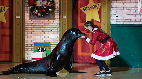 SeaWorld San Antonios Christmas Celebration