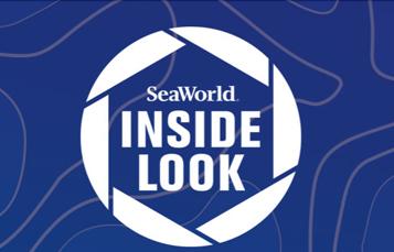 Inside Look at SeaWorld San Antonio