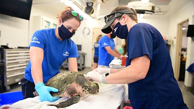 animal rescue at seaworld