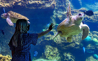 See Turtles at Turtle Reef at SeaWorld San Antonio