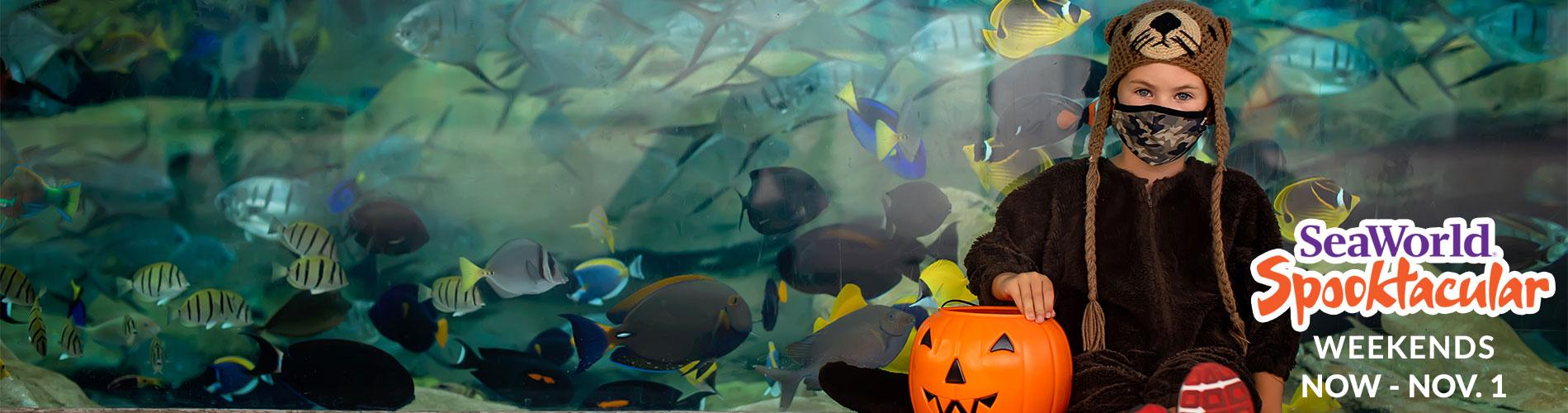 Halloween Spooktacular at SeaWorld San Antonio