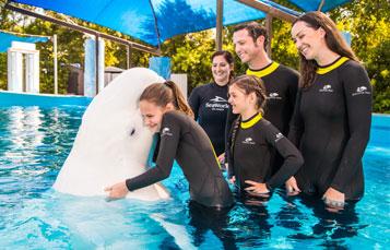 Beluga Swim