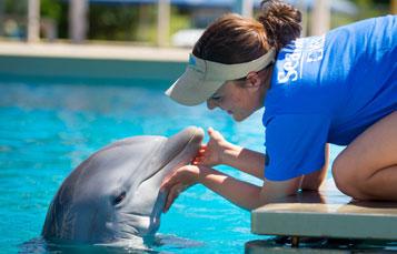 Dolphin Rescue Tour
