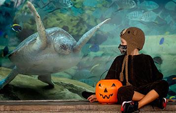 costumed boy in front of Turtle Reef at SeaWorld San Antonio Halloween Spooktacular