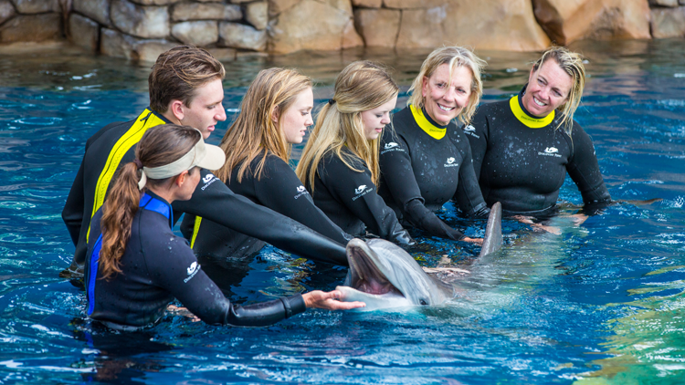 Dolphin with Group