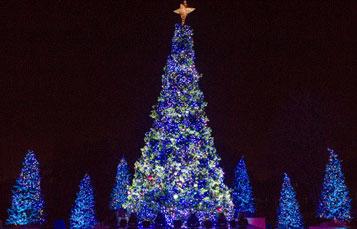 Christmas Tree Show