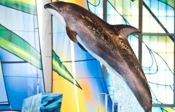 Dolphin Christmas