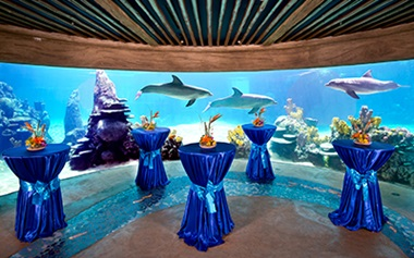 Dolphin Underwater Viewing Group Events