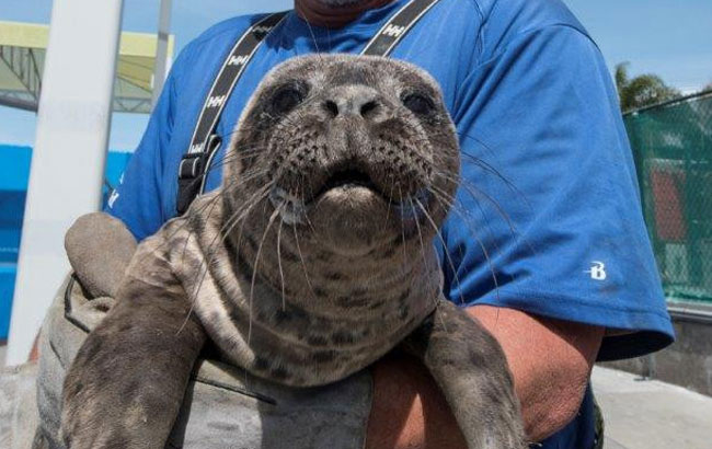 Rescued seal release