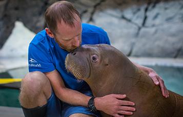 Animal Care Staff Hugging Walrus