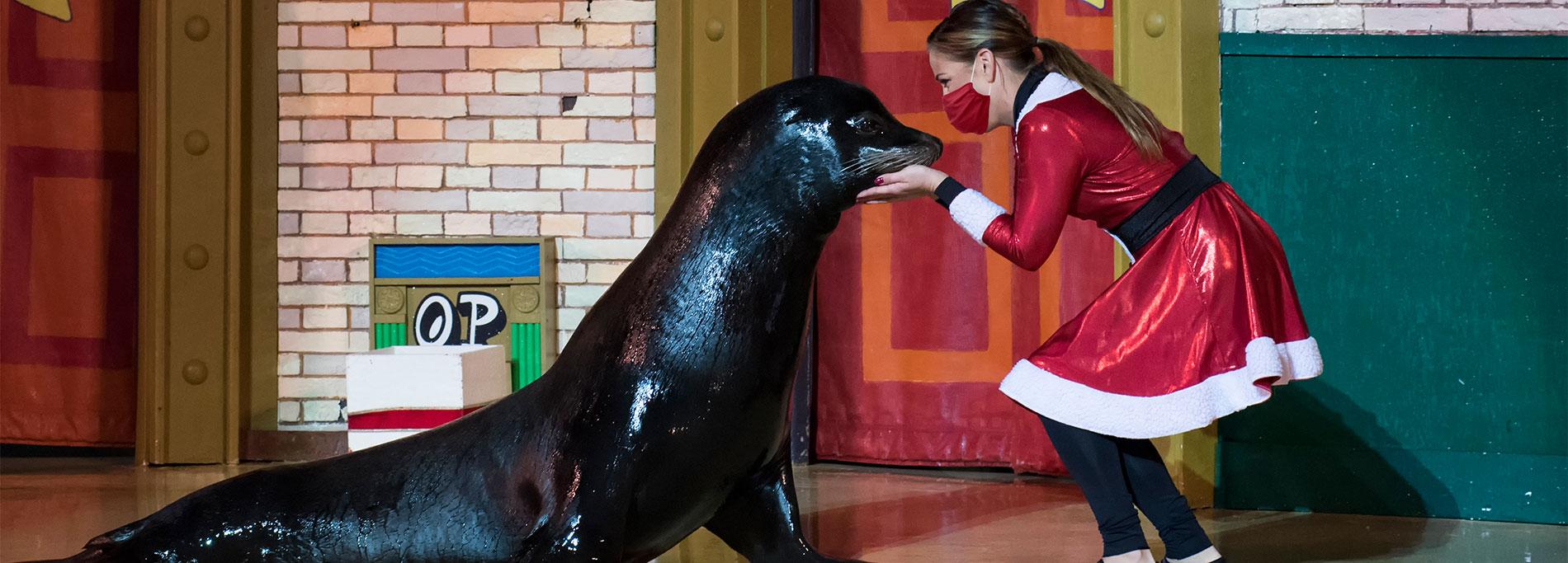 Countdown to Christmas holiday show at SeaWorld San Antonio