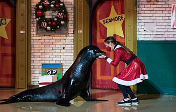 Countdown to Christmas holiday show at SeaWorld San Antonio