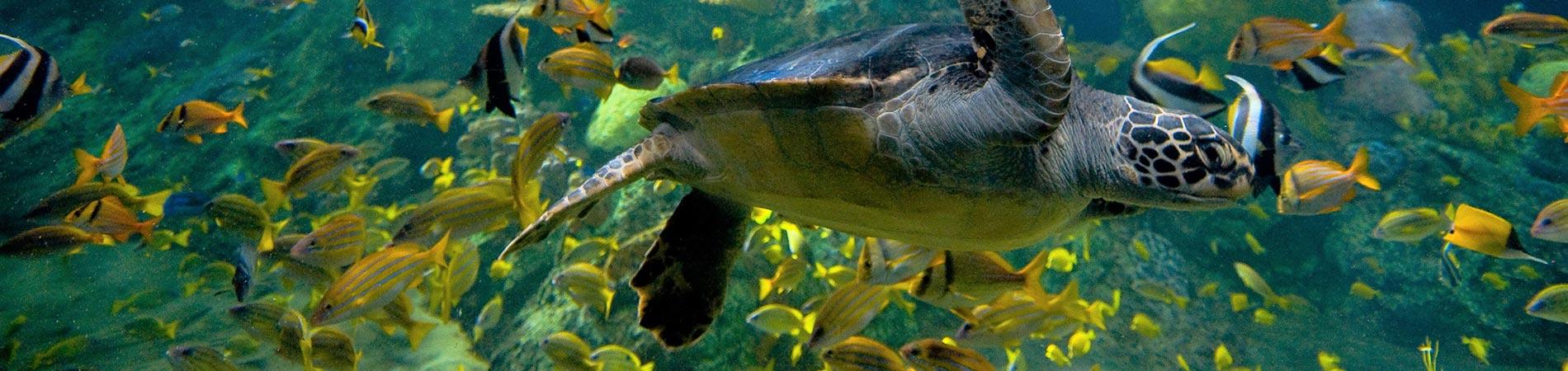 Sea Turtles at SeaWorld San Diego