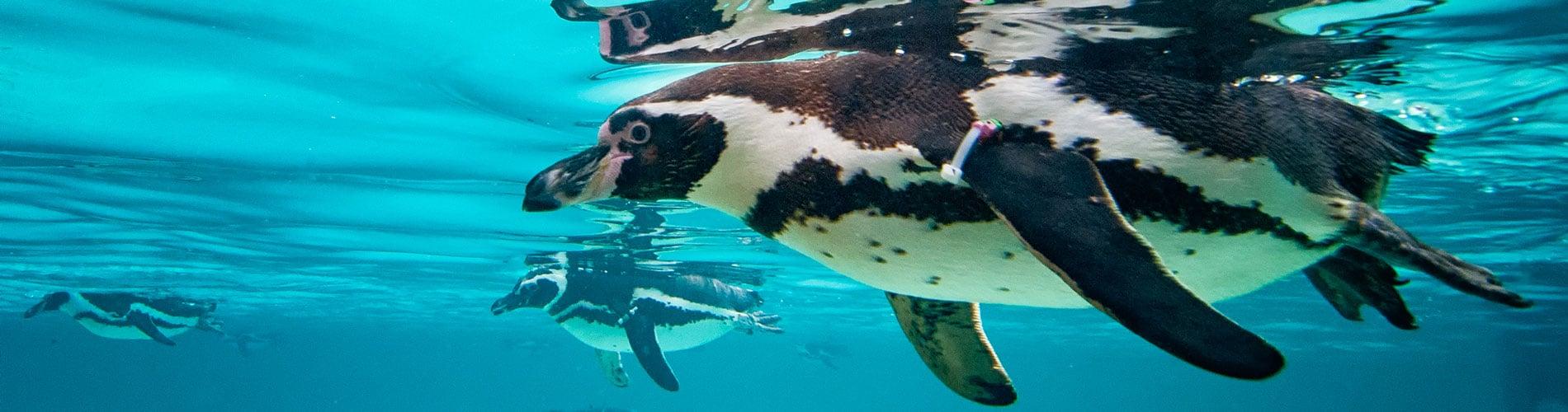 Animals at SeaWorld San Diego