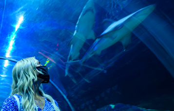 See Sharks from underwater tunnel