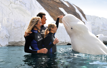 Beluga Interaction Program SeaWorld San Diego