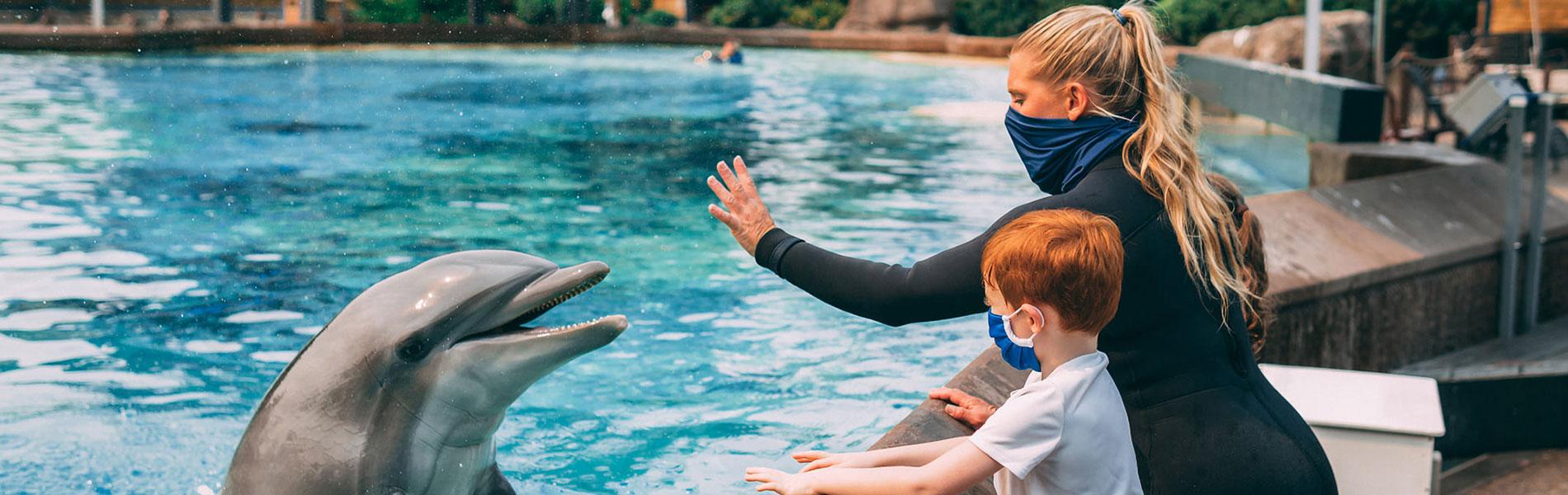 Animal Experiences at SeaWorld San Diego