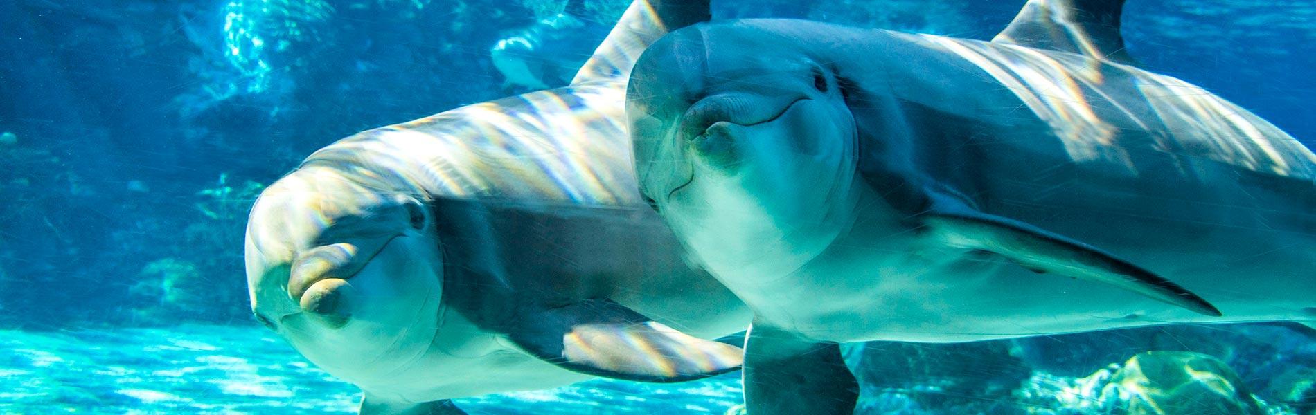 Dolphin Encounter Tour at SeaWorld San Diego