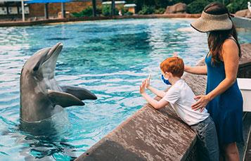 Dolphin Encounter at SeaWorld San Diego