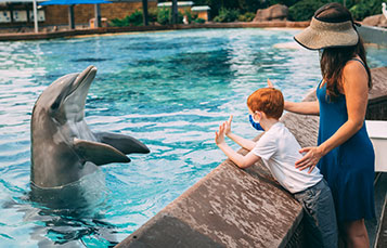Dolphin Encounter at SeaWorld San Diego