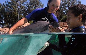 Swim with Dolphins SeaWorld San Diego