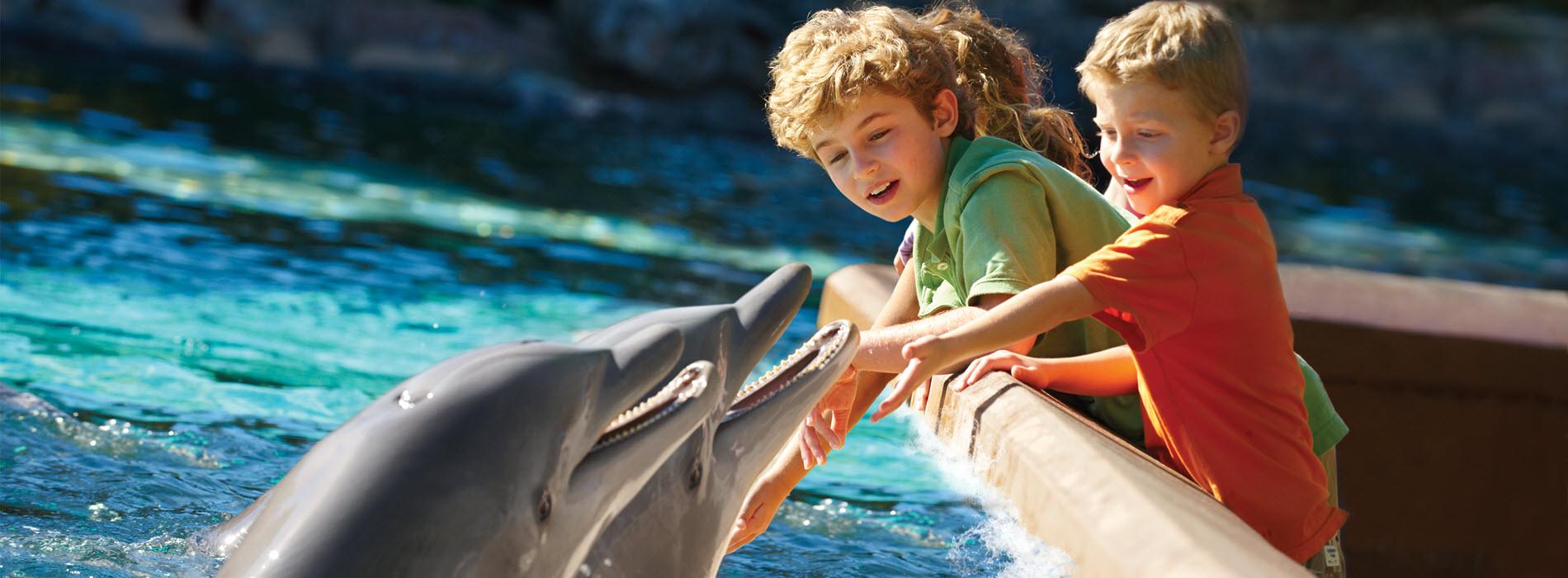 Dolphin Encounter Boys