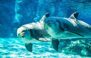 Dolphins at SeaWorld San Diego