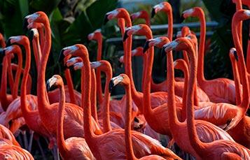 Flamingo Encounter at SeaWorld San Diego